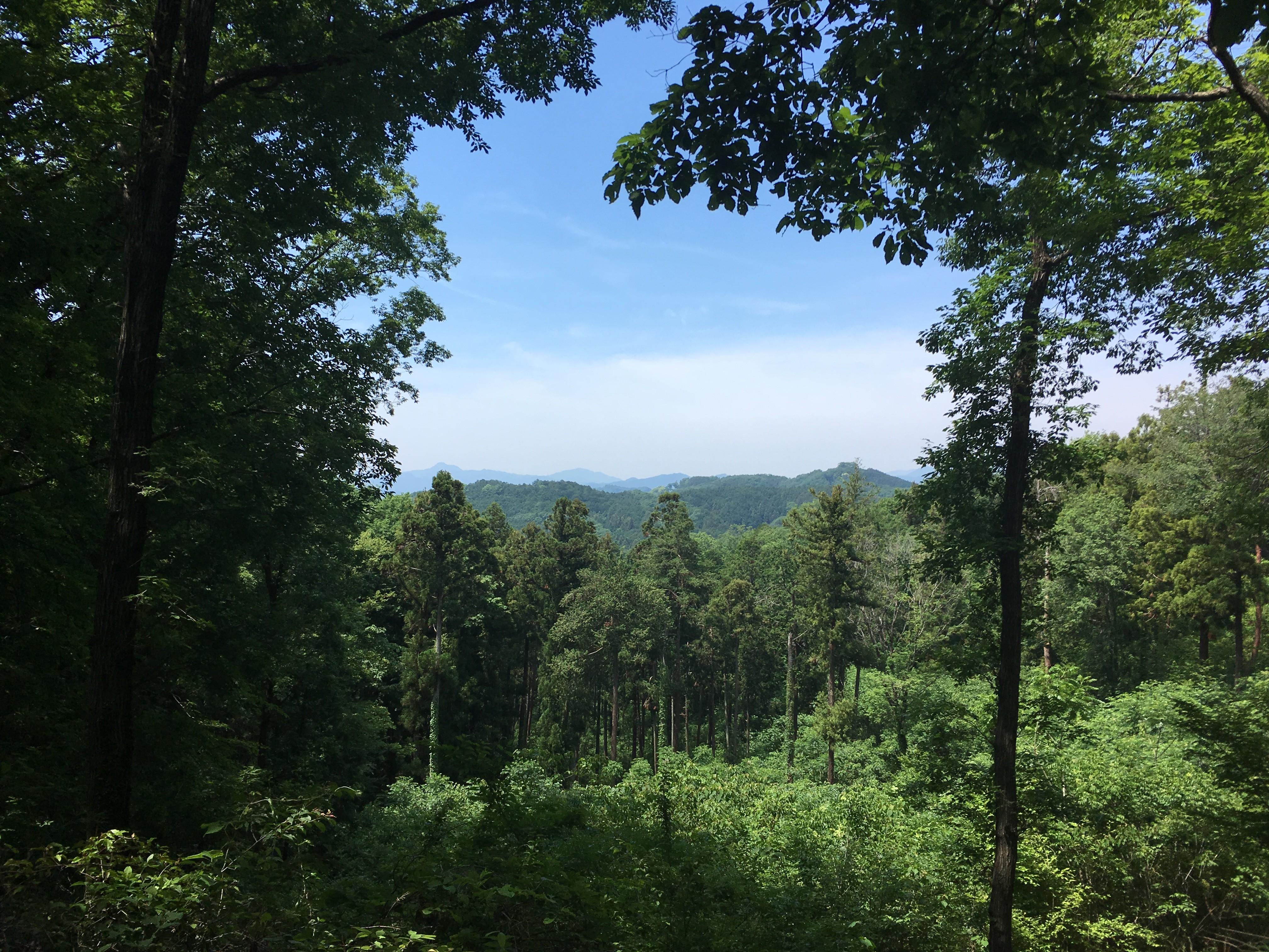 萩の峰からの風景