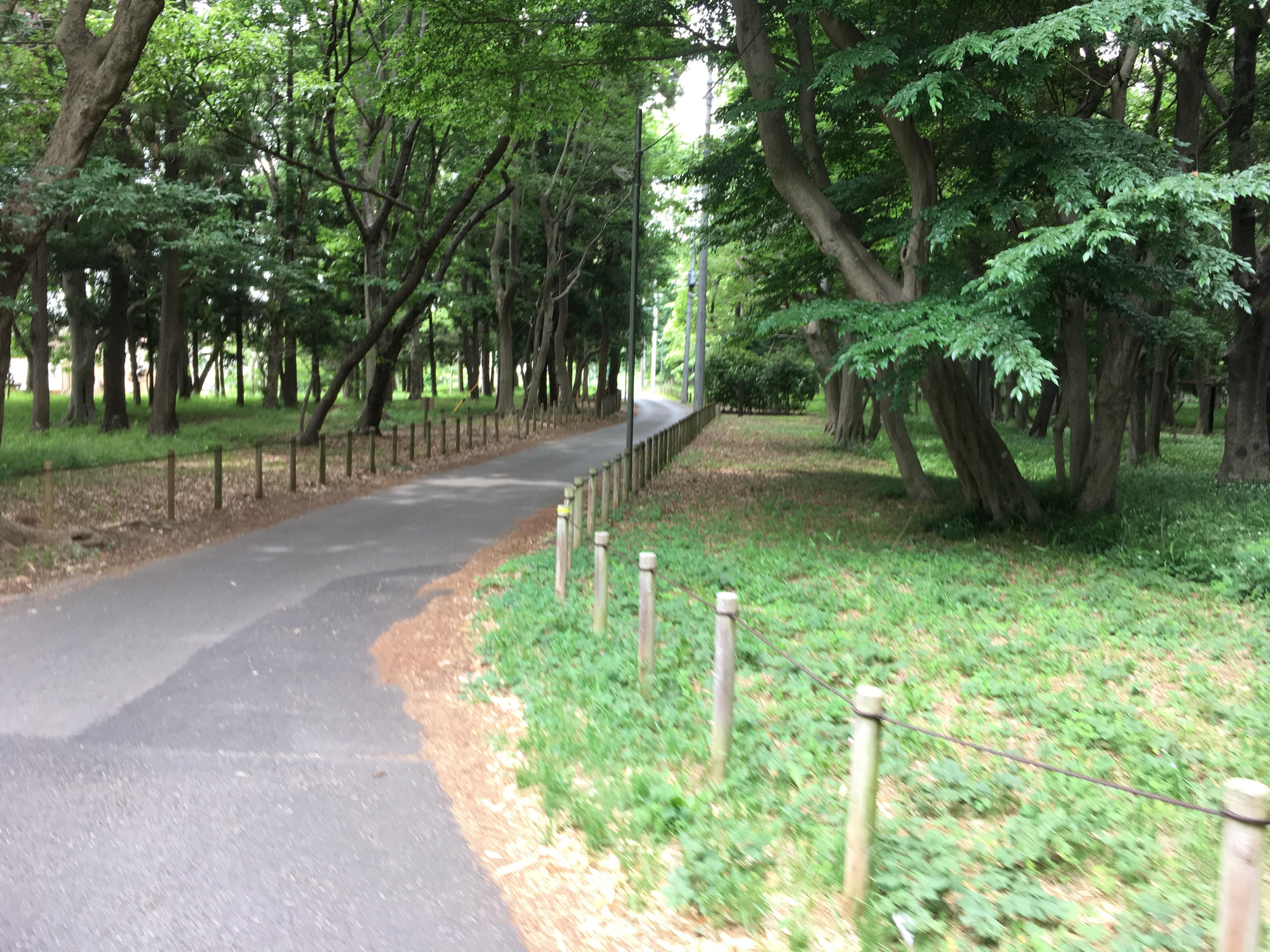 駒木5号公園(駒木ふるさとの森)