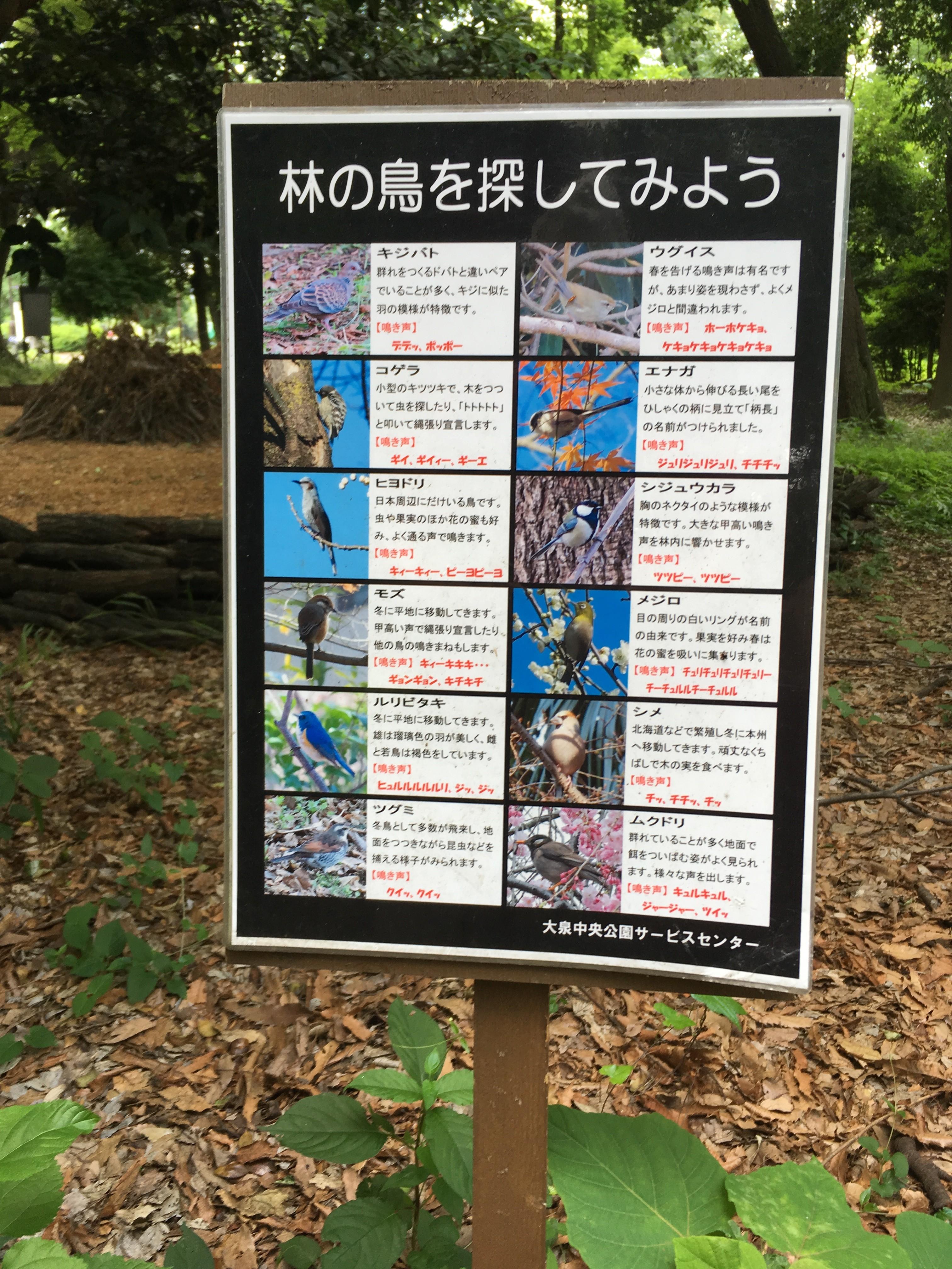 都立大泉中央公園林の鳥を探してみよう