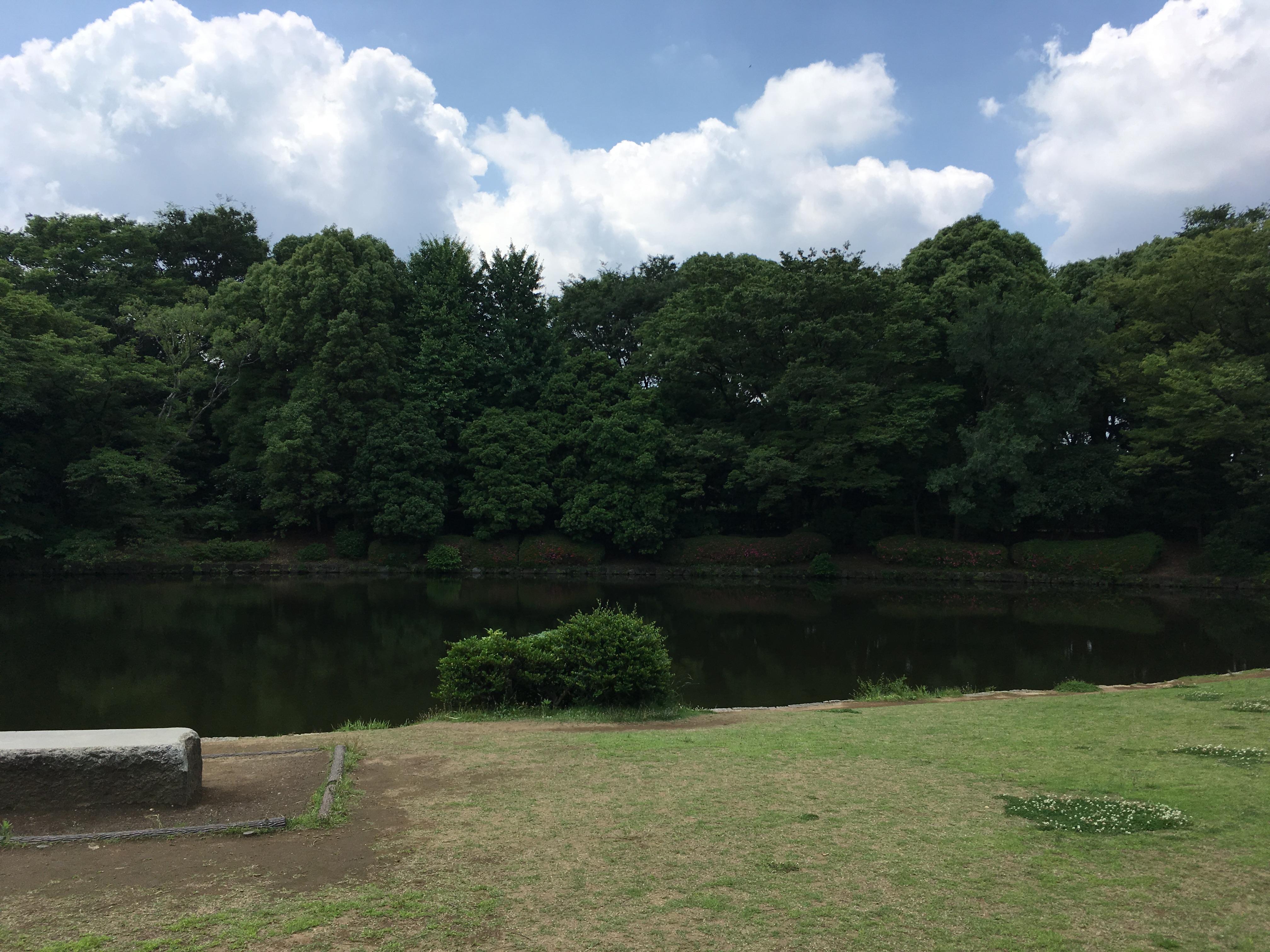 北の丸公園の池