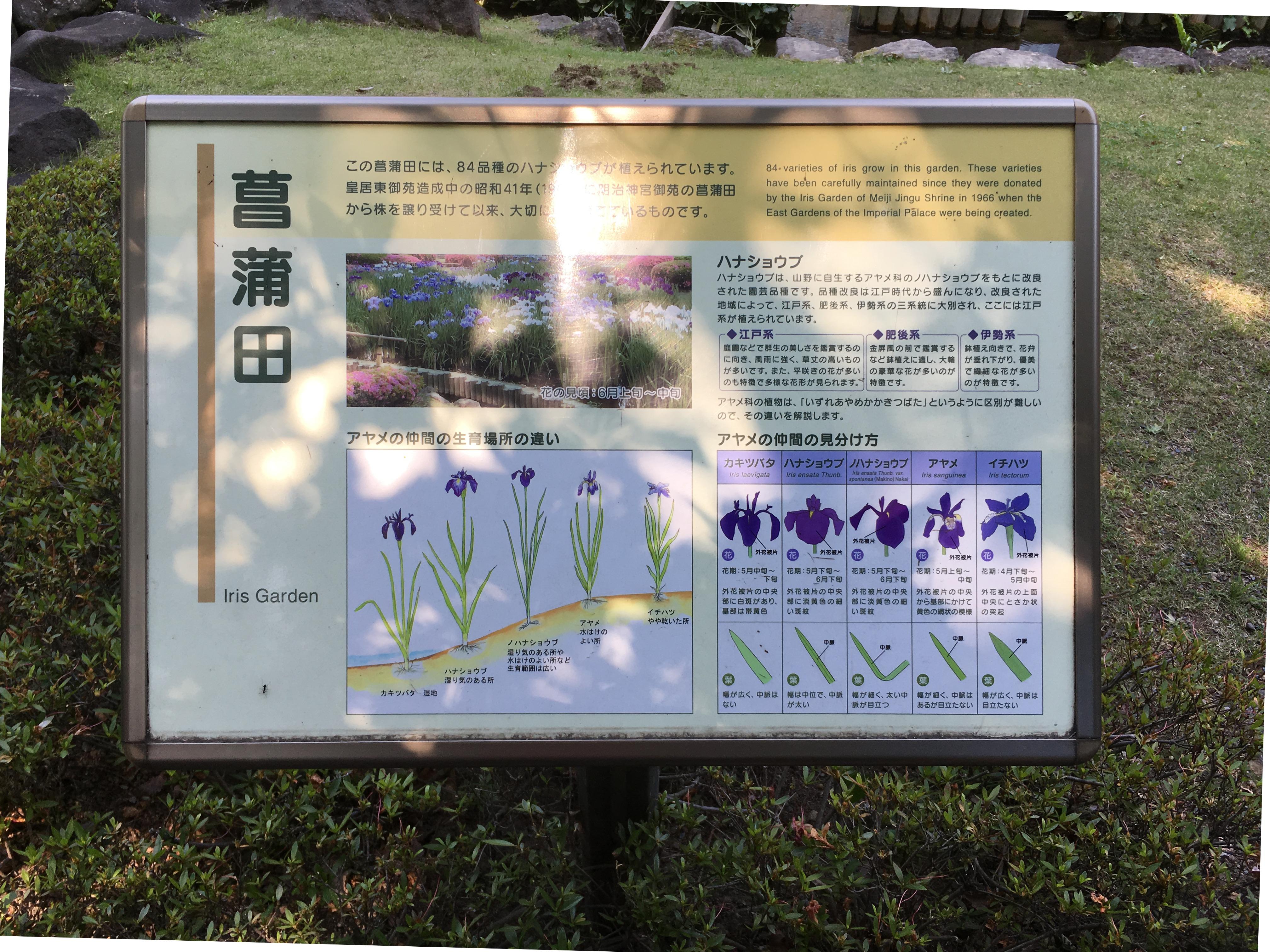 菖蒲田(二の丸庭園)