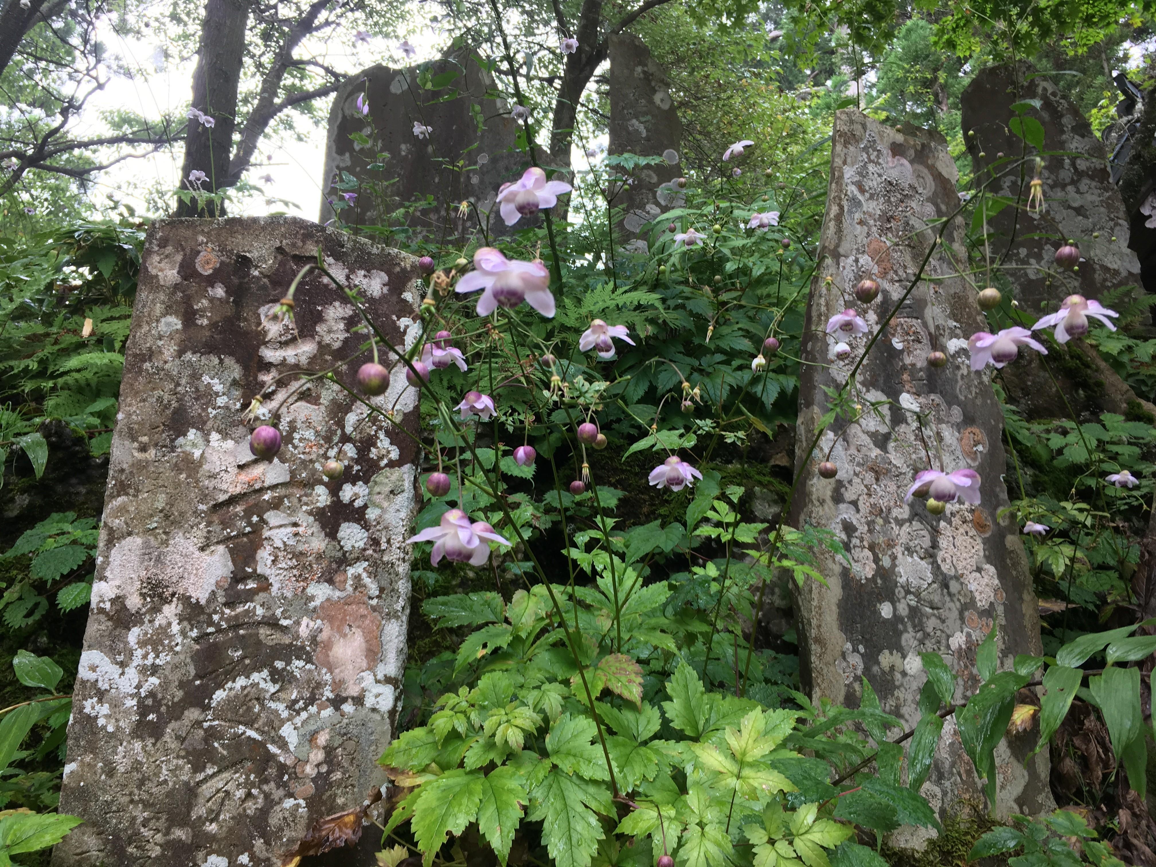 八柱社(武蔵御嶽神社)周辺