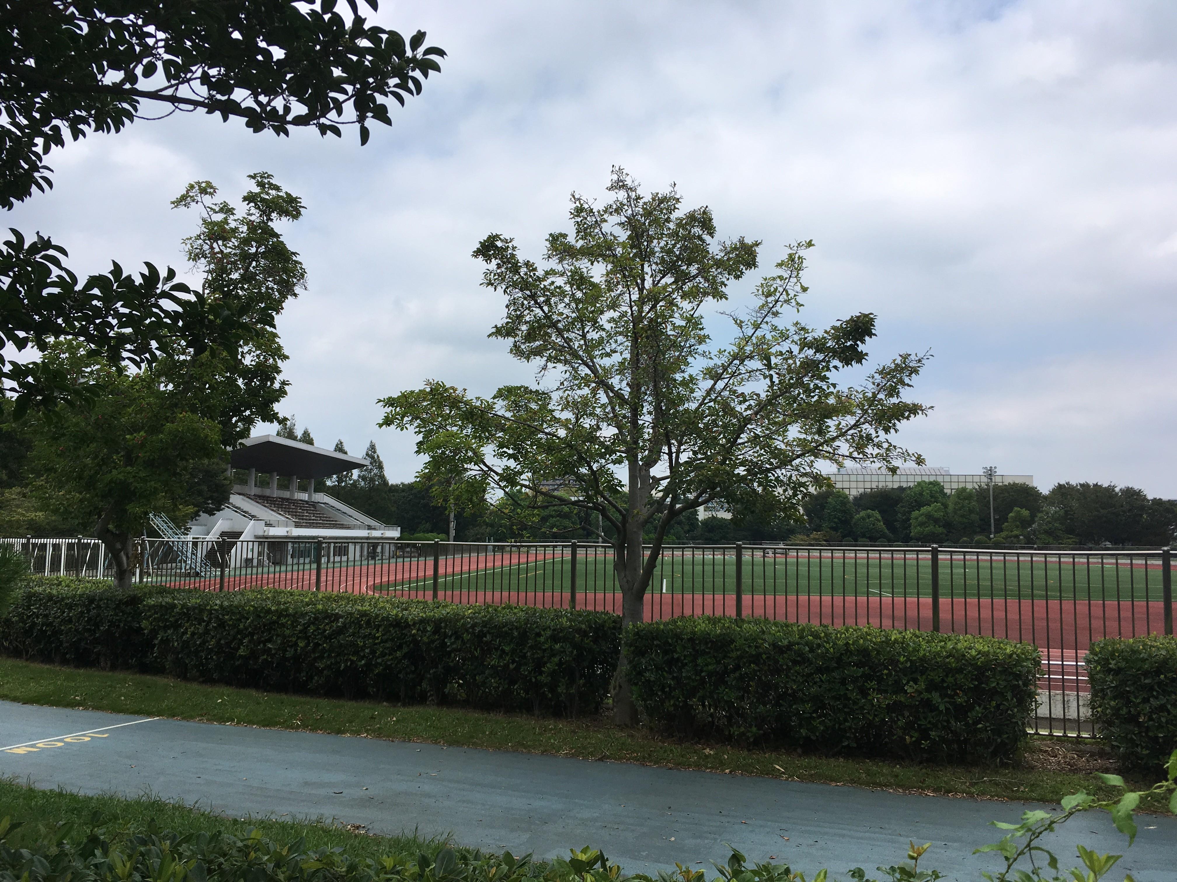 朝霞中央公園陸上競技場