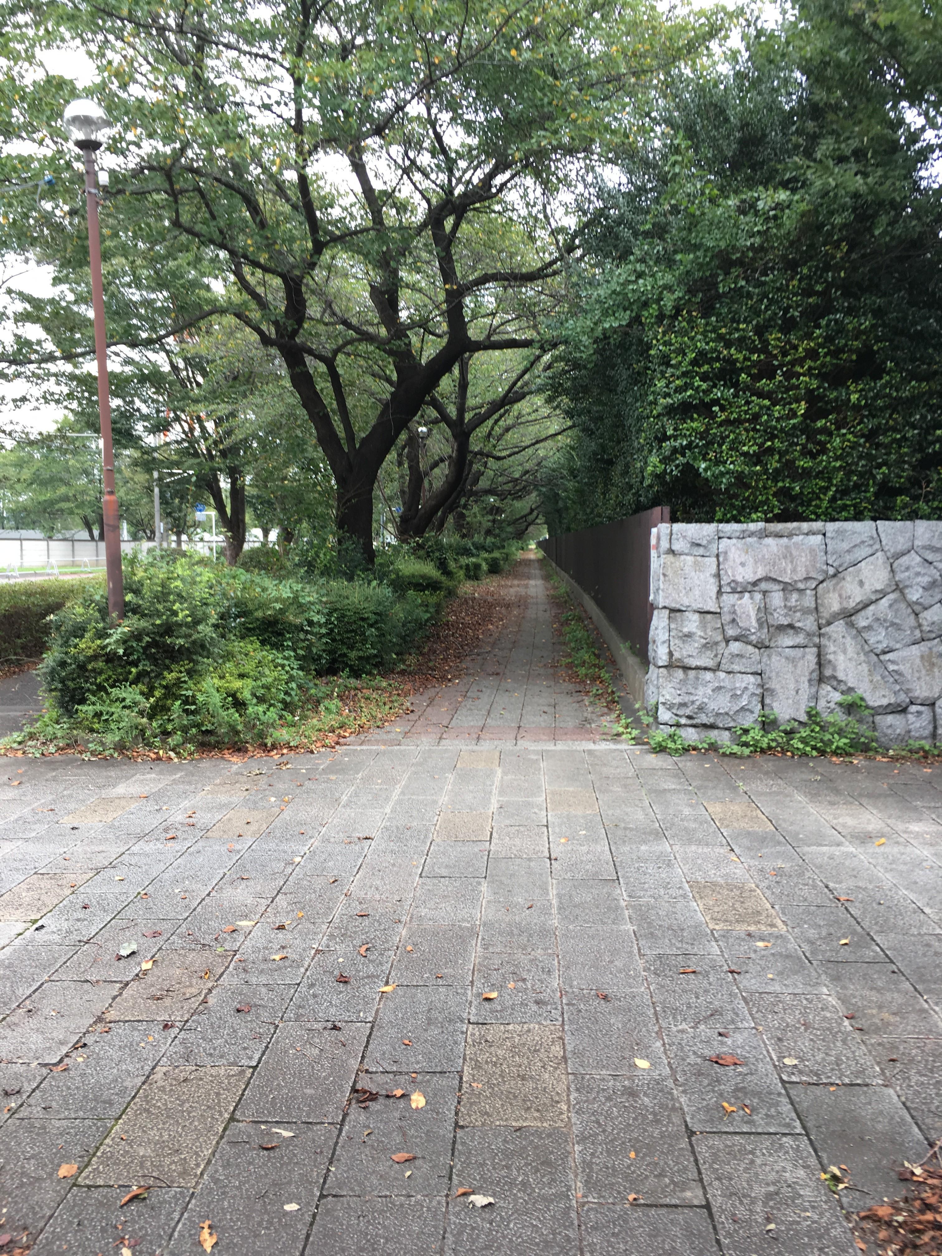 東京朝霞線歩道