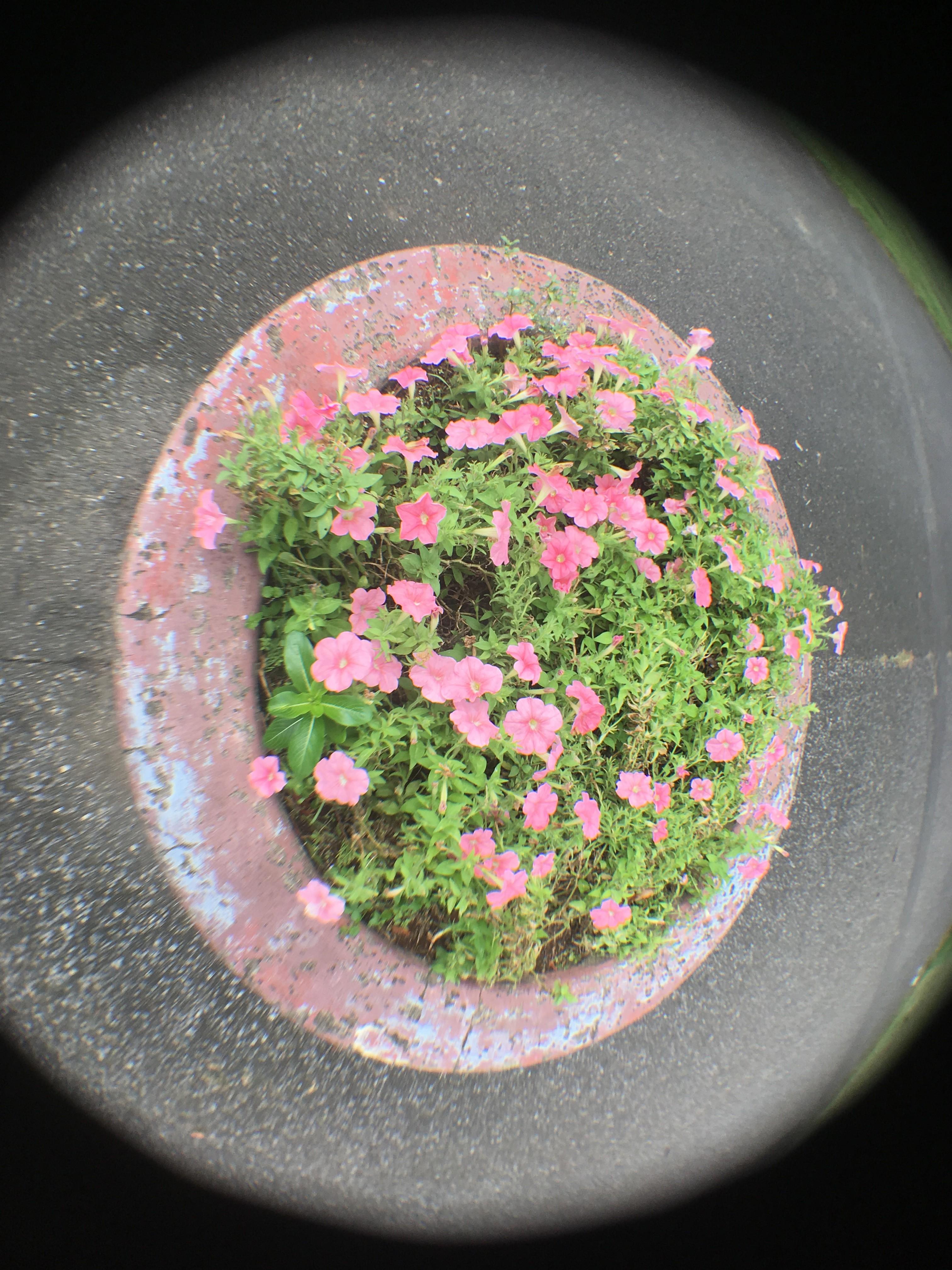 花壇を魚眼レンズで撮影
