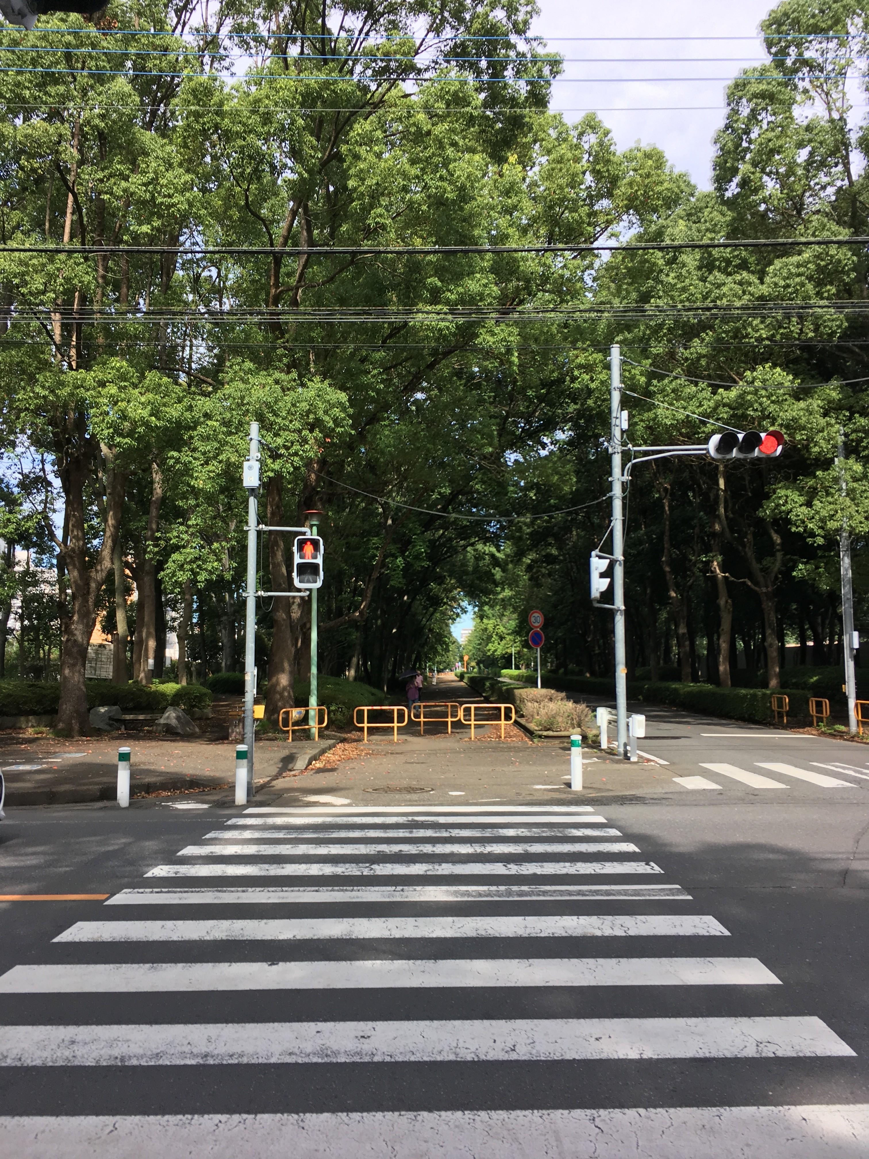 若葉台通りと富士見緑地通り交差点