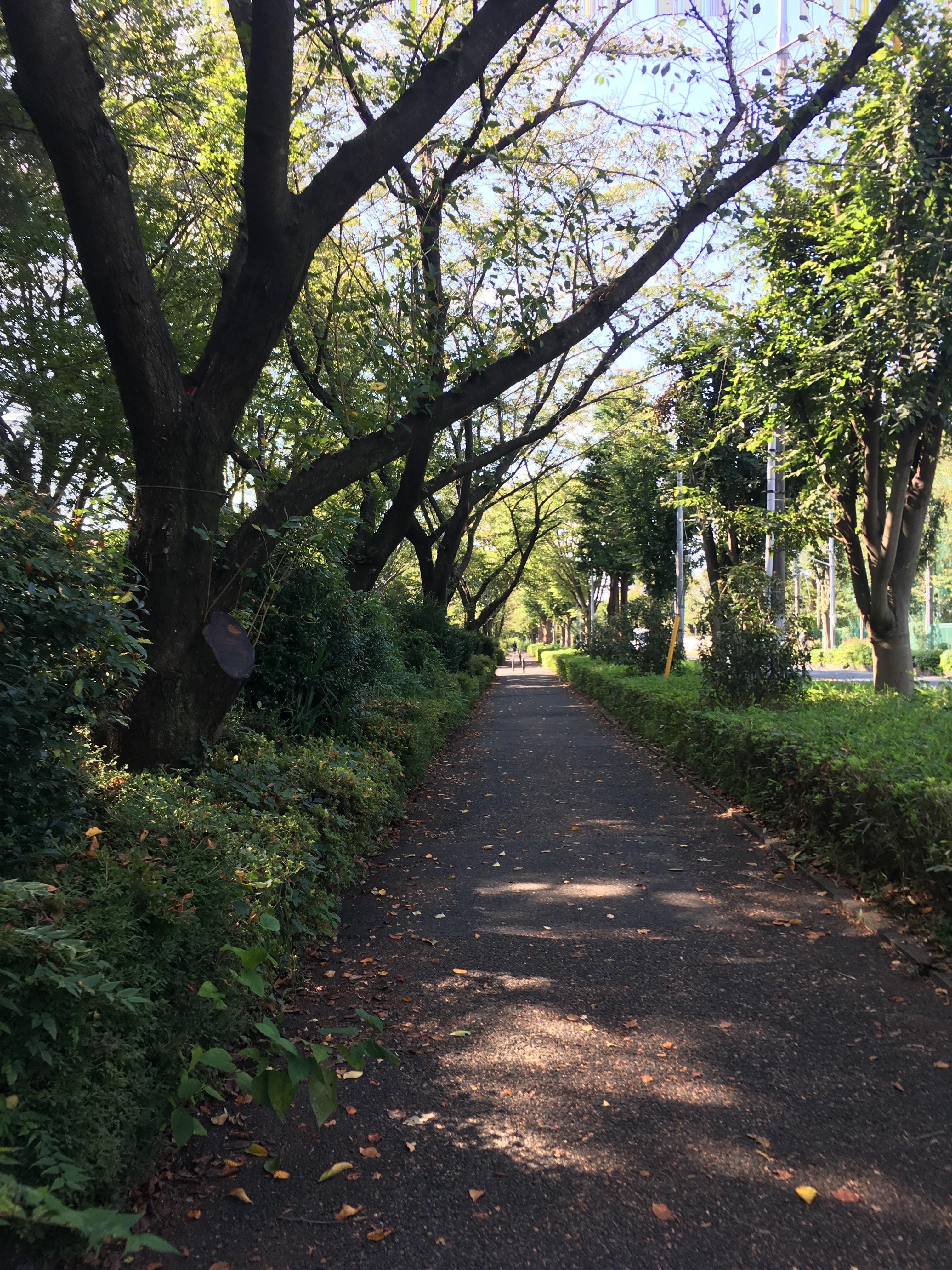 東京都道・埼玉県道108号東京朝霞線遊歩道