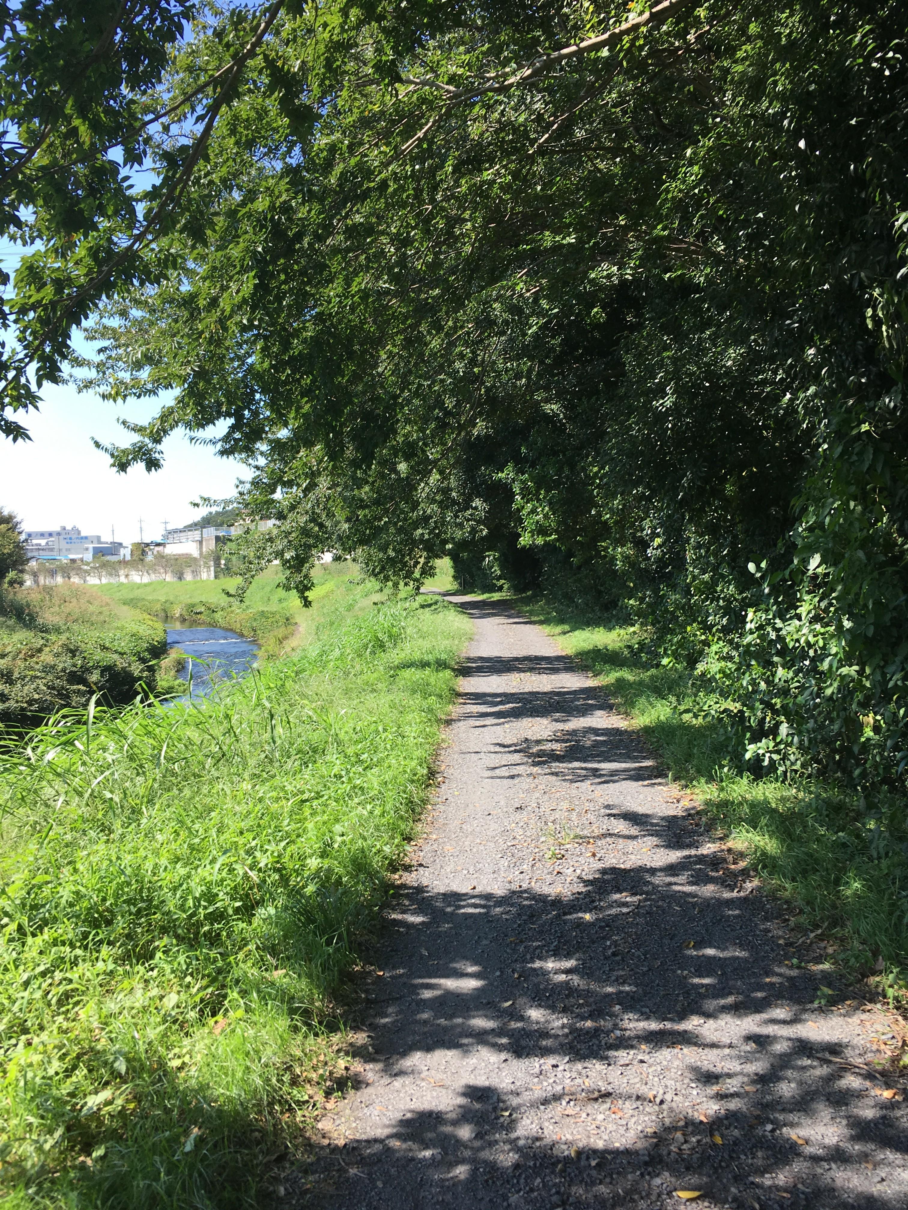 黒目川左岸遊歩道を上流に向かって歩く