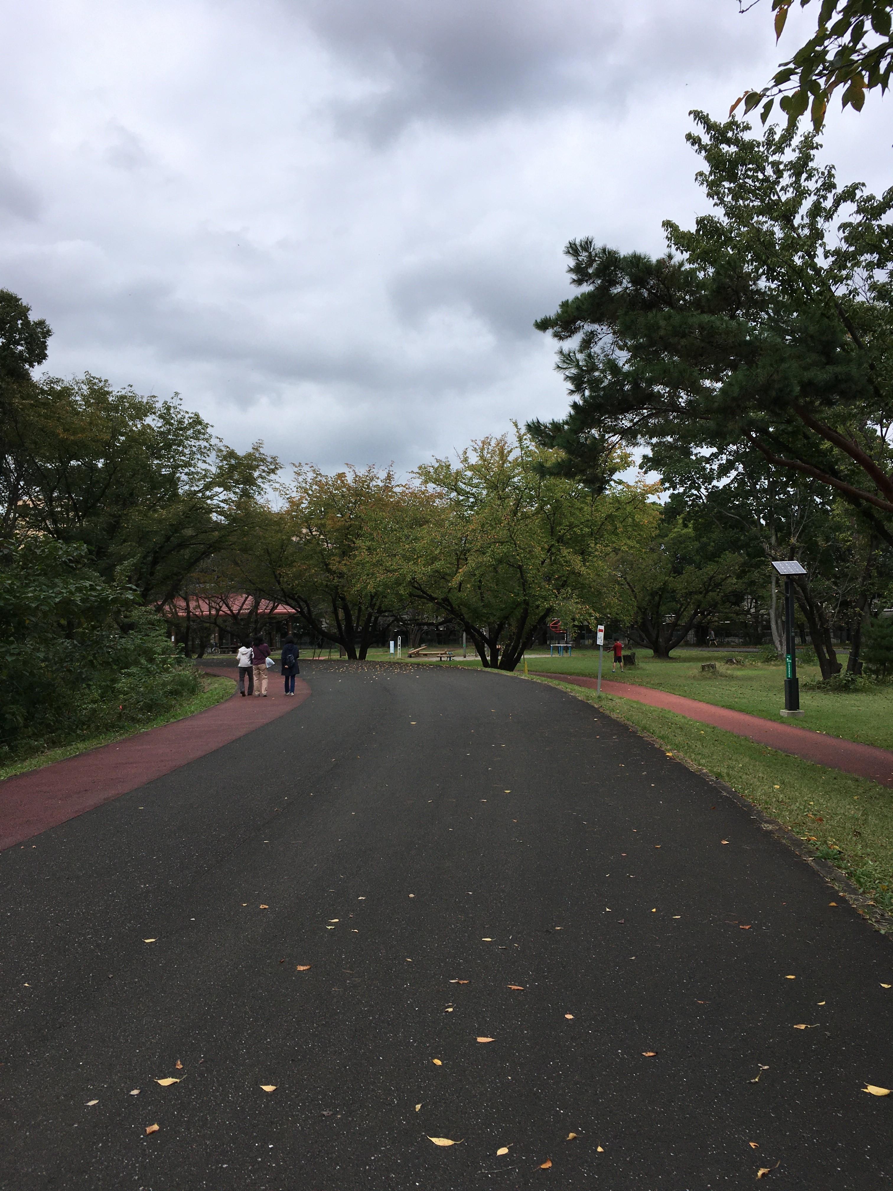 埼玉県営和光樹林公園内道路