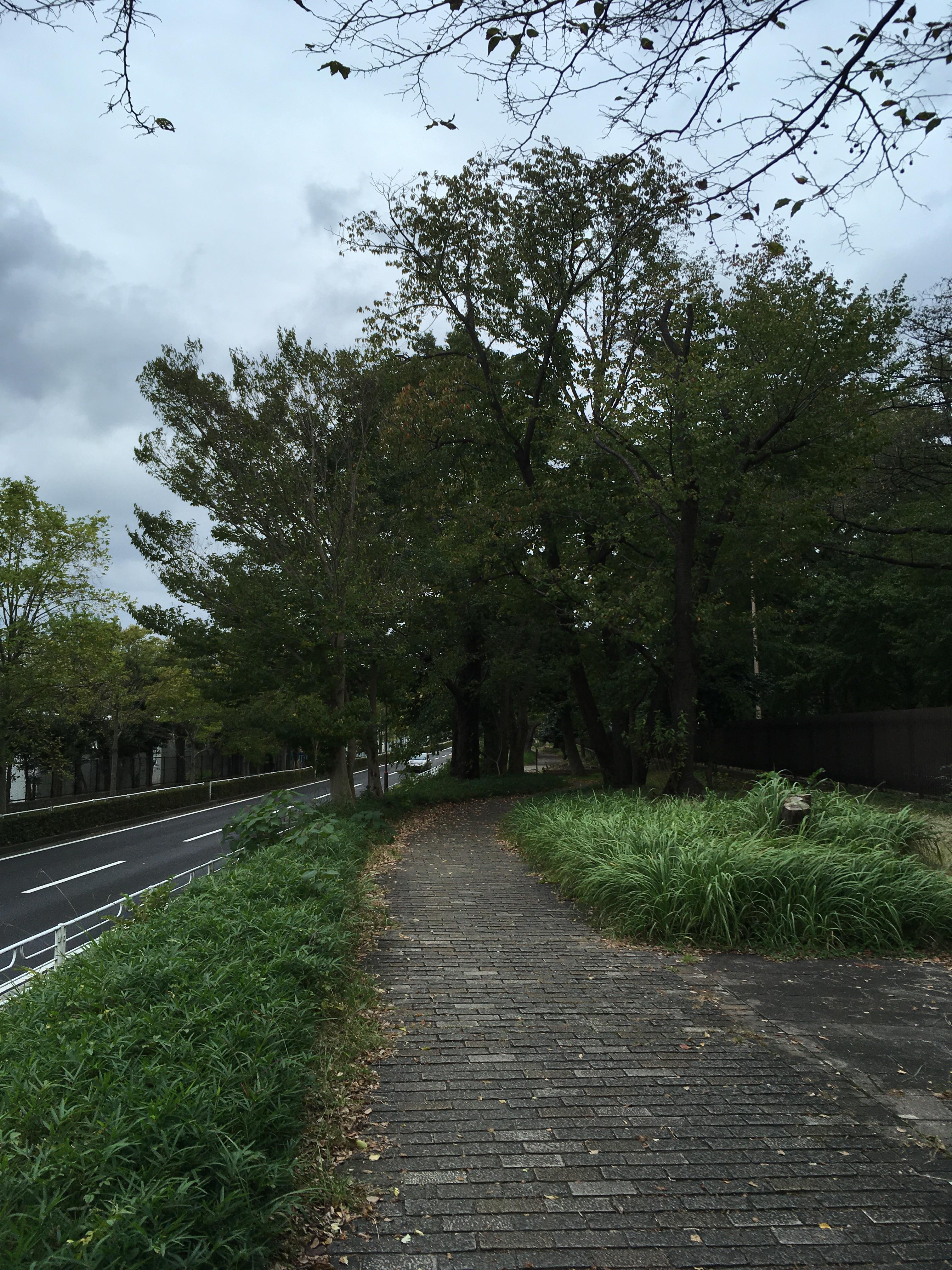 新座緑道遊歩道
