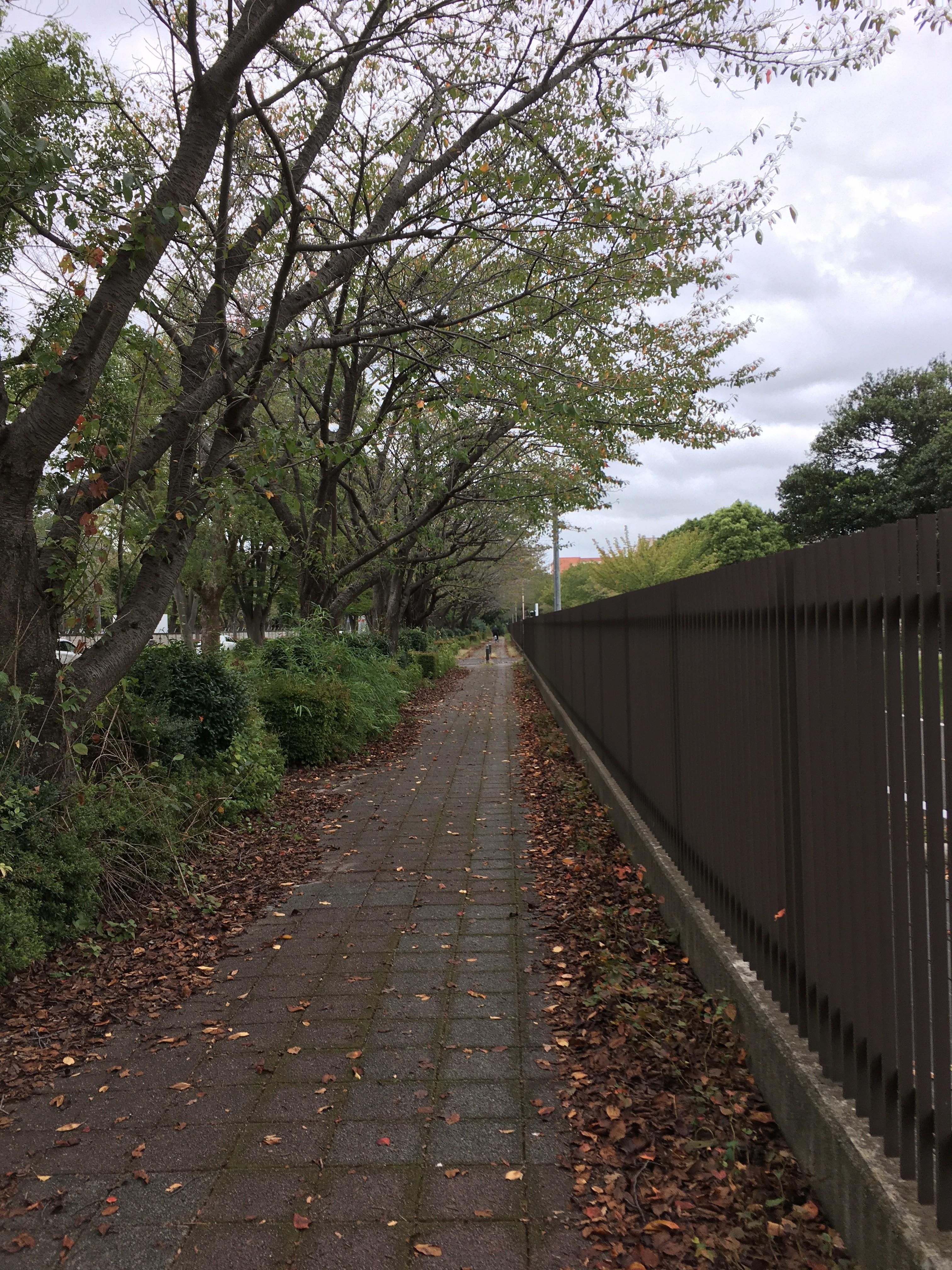東京朝霞線遊歩道