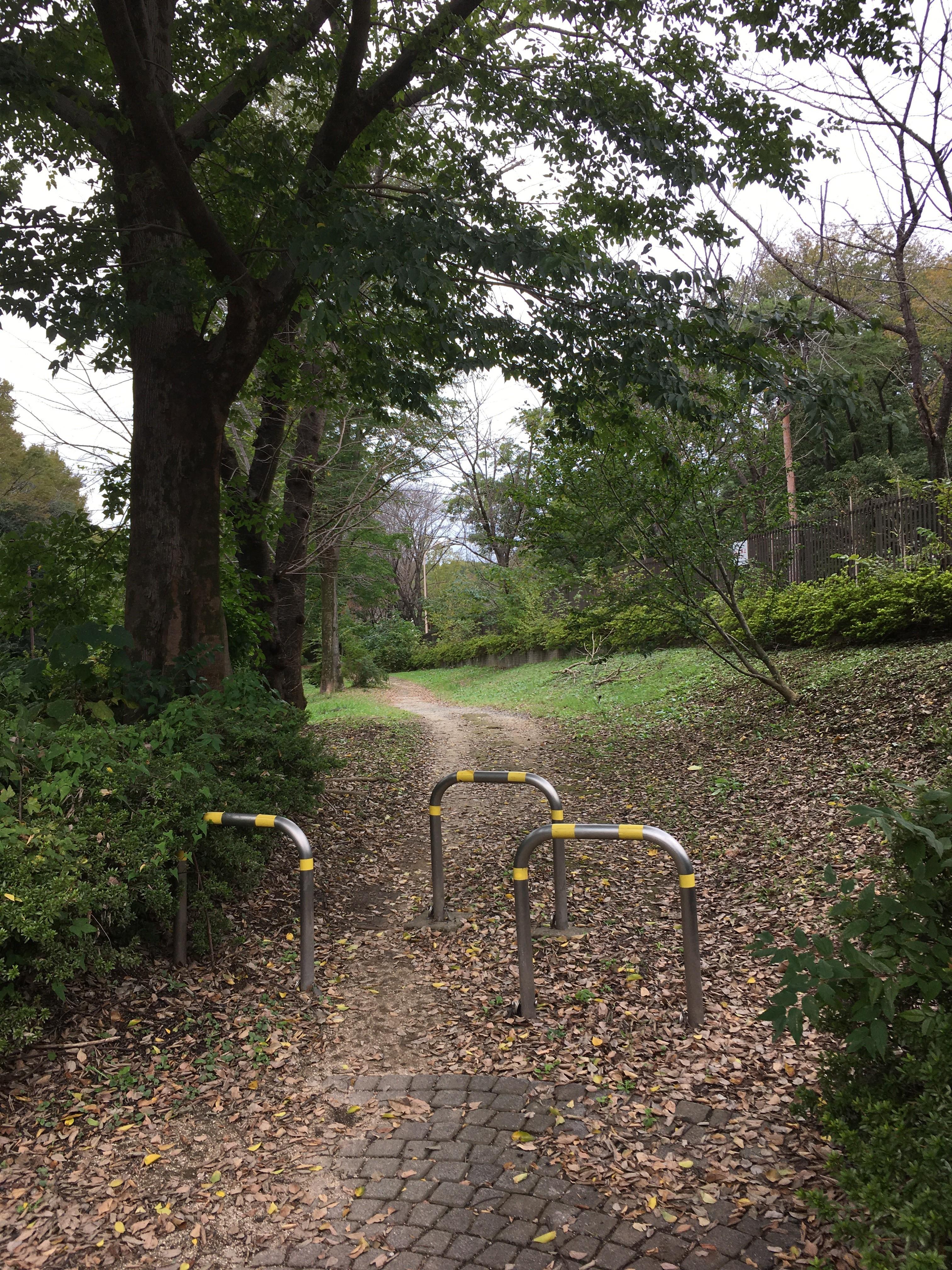 都立大泉中央公園遊歩道