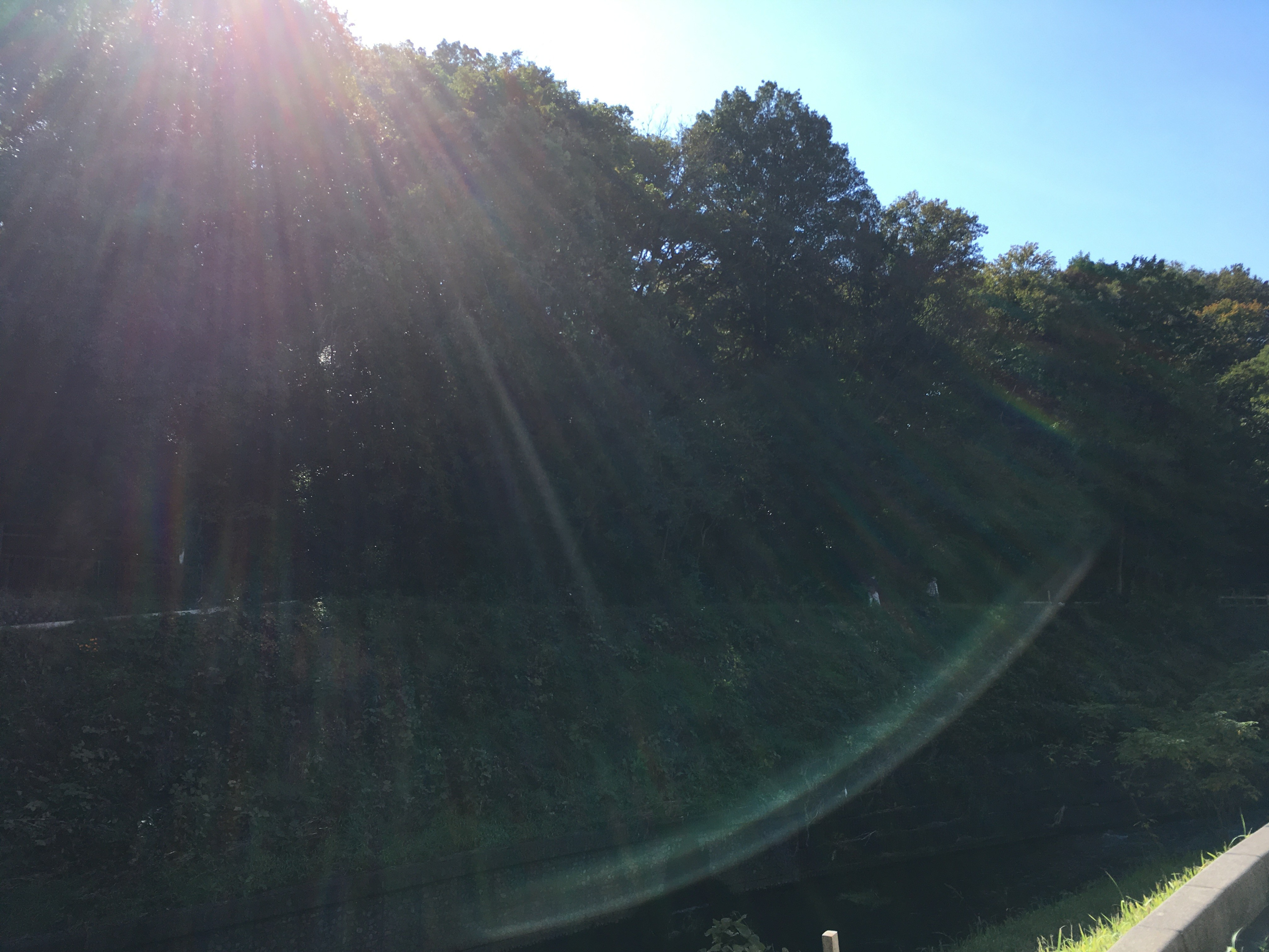 黒目川左岸から妙音沢を眺める