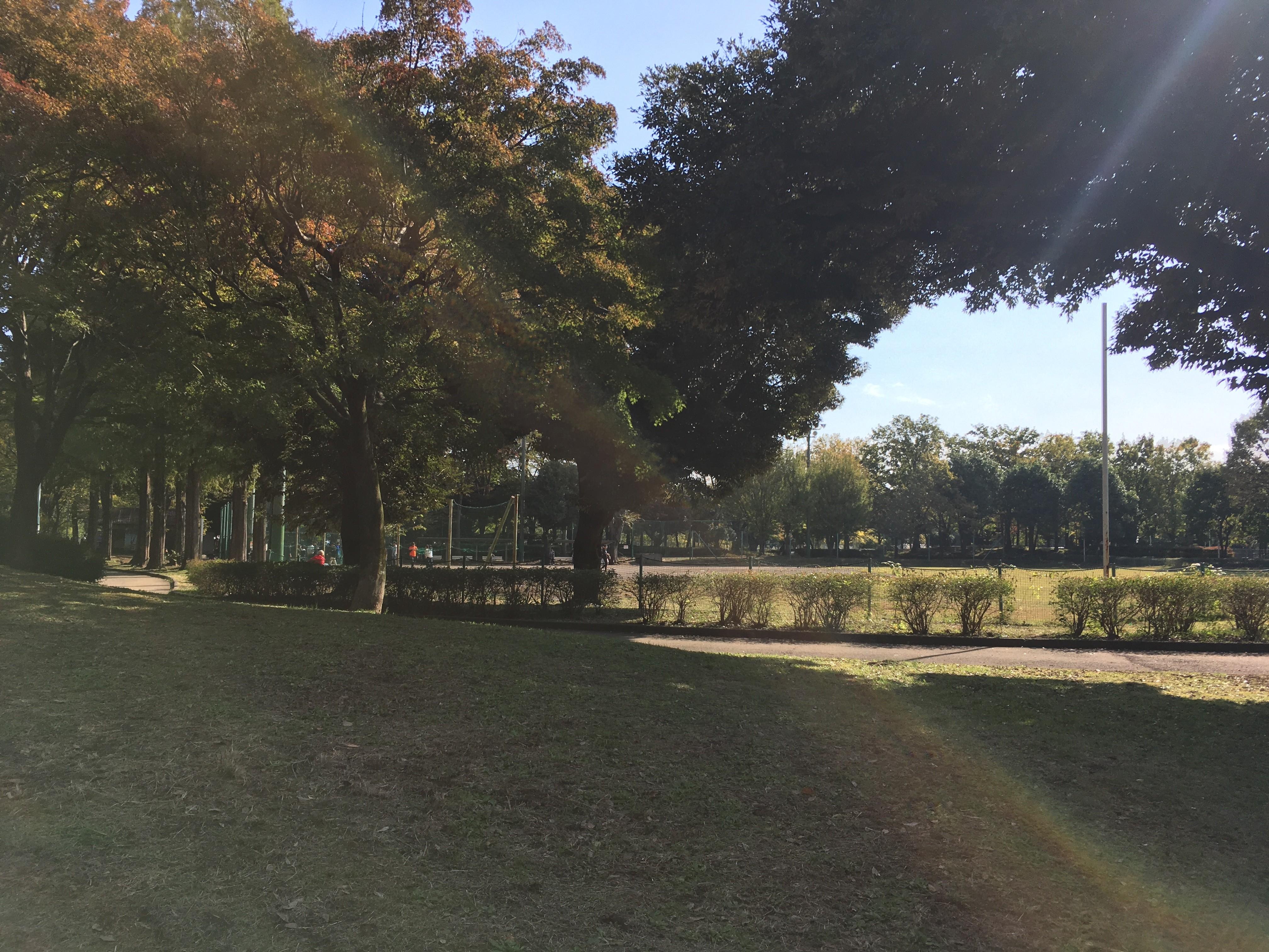芝生広場(青葉台公園)