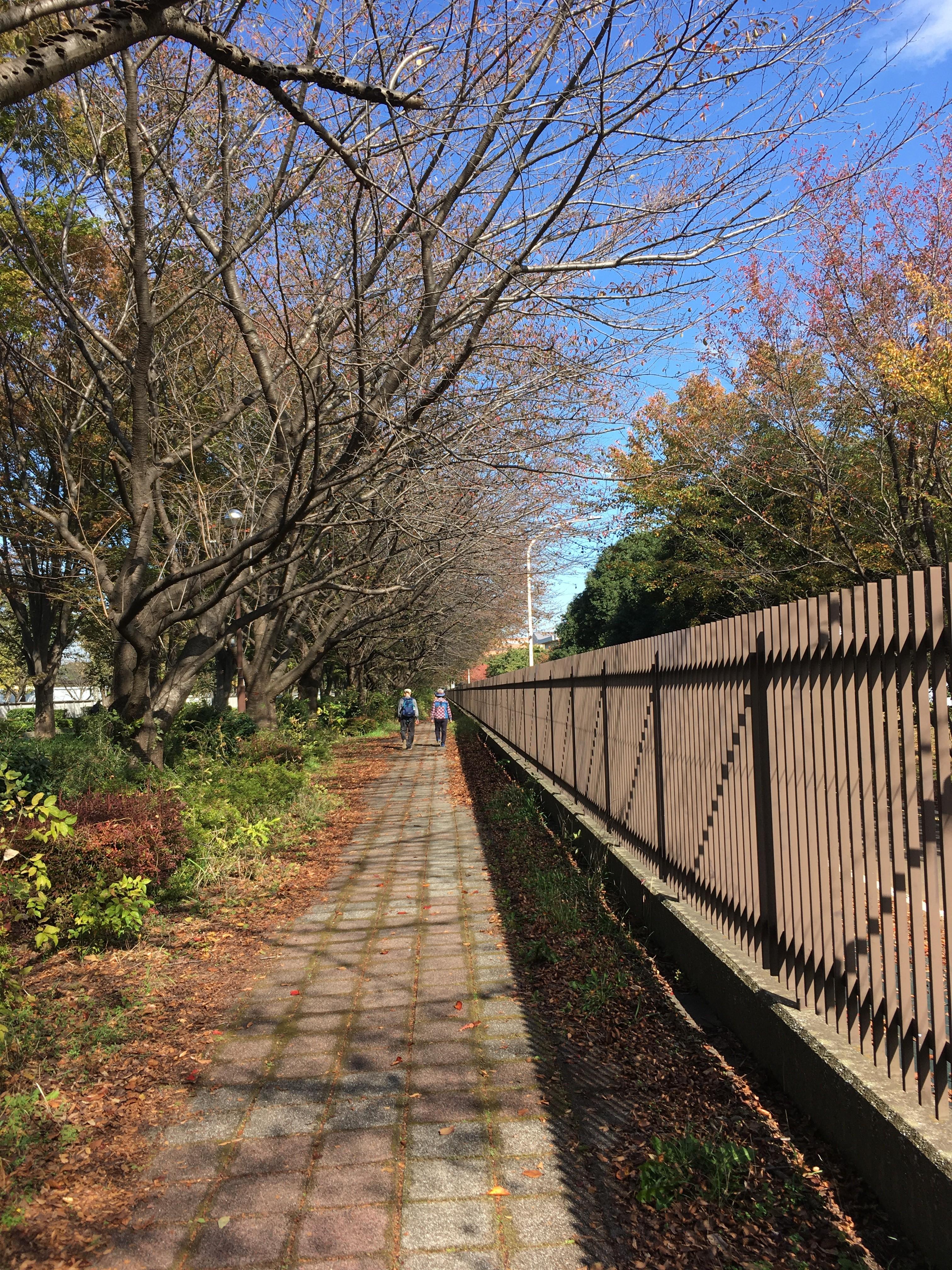 東京朝霞線緑道