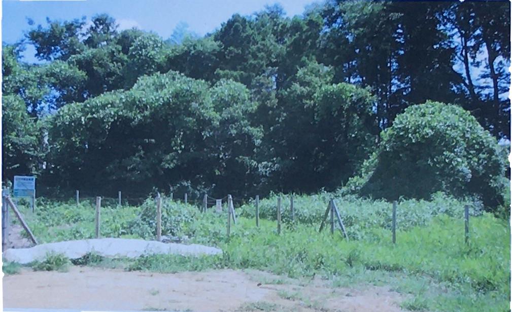 平成22年8月に整備する前の湧水代官水を撮影したものです。