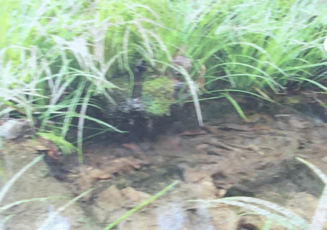 渓谷の水、湧水