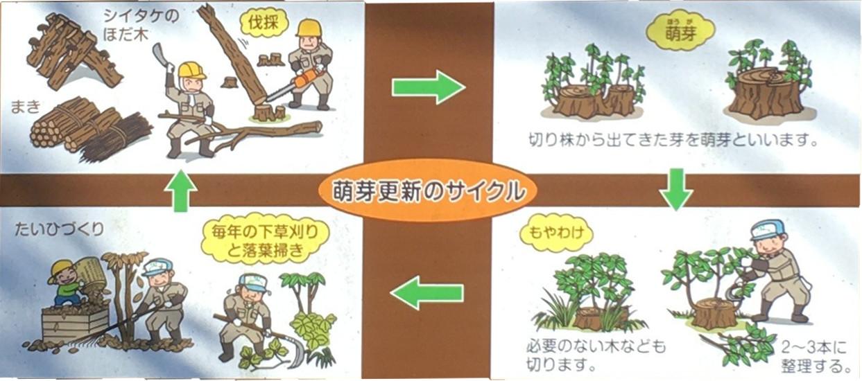 ヤマ(雑木林)のモデル